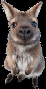 Visapath Australia