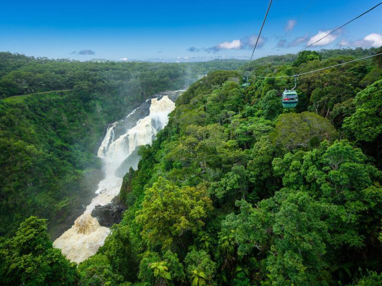 Tropischer Regenwald in Australien