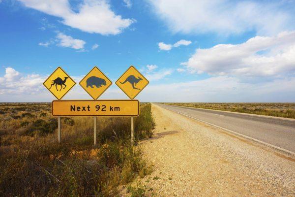Straße in Australien mit Schildern als Warnung vor Kängurus, Wombats und Kamelen für die nächsten 92 km